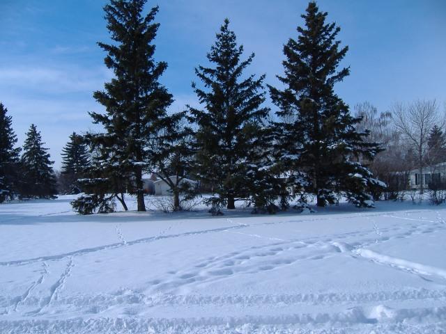 Sneeu in die park oorkant my huis